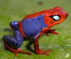 Spider-Frog