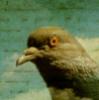 bassus userpic