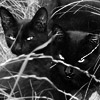 cats_bw