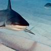 Stock; Shark