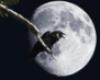 darkishraven userpic