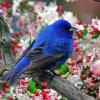yon_design userpic