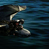 Rosanna: movie: HTTYD 2 Flight