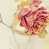 visionsbeyond: flower