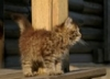 za_cat