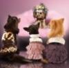 vip_dog userpic