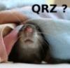 rat, QRZ?, mouse