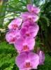 beautiful_flowe userpic