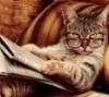 кот читает газету