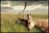 Рог в олене