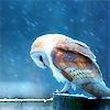 meumcorculum userpic