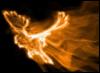 огненный сокол