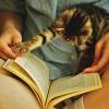 Кот читает книгу
