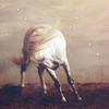 stock animal: horse