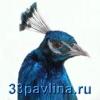 33pavlina userpic