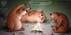медведи санкции