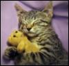 kitty sleeps with teddy