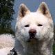 shinigami_steh userpic