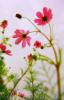 pinktincanagain userpic