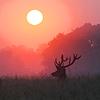 tomorrow and tomorrow and tomorrow.: sunfire deer