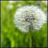 the_springtime userpic