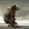 bear bicycle