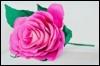 faceblog userpic