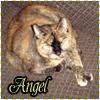 Deborah Henning-Huff: Angel