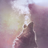 stock: wolf howl