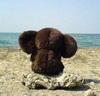 Ушастый у моря