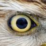 birdofprey userpic