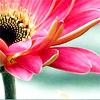 misc - pink petals