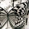 tracyj23: Butterfly