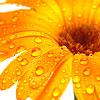 Sissi: Flower