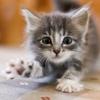 C.x: Cat kitten