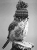 lunary_owl userpic