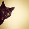 Whoa! Kitty! from Esteefee