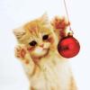 sassy_cat: pink