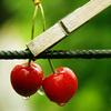 cherry_kf userpic