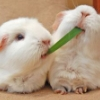 lazy_hamsters userpic