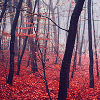Caspian: Autumn woods