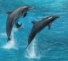 littledolphins userpic