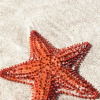 starfishstar