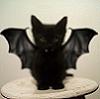 кот дракулы