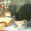 tea with cat and books, kitty tea