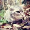 hiirenvirna userpic