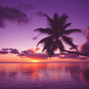 tracyj23: Scenery - purple palm sunset
