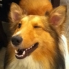 Collie Wink