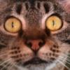 theoremcat userpic