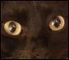 LNata: cat_eyes